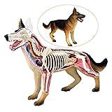 LXX Hundemodell – Anatomisches Wolfhund, Anatomie, Tierbiologie, abnehmbares Organ-Puzzle zum Zusammenbauen von Spielzeug, Medizinisches Lehrmodell -
