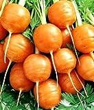 round carrot pariser markt 4 semi - daucus carota