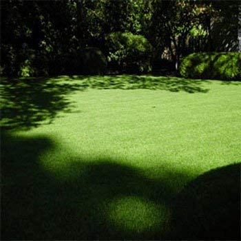 Outsidepride POA Supina & Rough Bluegrass Elite Lawn Shade Grass Seed Blend - 1 LB