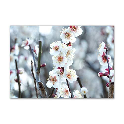 Tulup Impresión en Vidrio - 100x70cm - Cuadro Pintura en Vidrio - Cuadro en Vidrio Cristal Impresiones - Flores y Plantas - Rosado - Flores de Cerezo