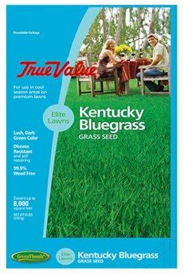 Barenbrug USA TVKBG7 TV 7 lb Kentucky Bluegrass Seed