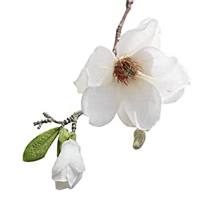 Artificial Leaf Magnolia Flowers, 2 Heads or 1 Head Floral with a Bud and Leaves, BCDshop Wedding Bouquet Party Home Decor