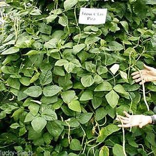 "3.2 Oz /"" Sampler Packet /"" Bermuda Grass Seed Common Unhulled"