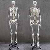 人体模型 人骨標本 人骨 医学教材 医療用 全身模型 持ち運び可 45cm タイプ 85cm タイプ (85cmタイプ)