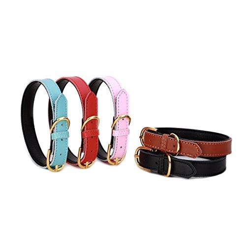 Petween Basic Classic Gepolsterte Leder Haustier Halsbänder für Katzen Welpen Kleine Medium Hunde