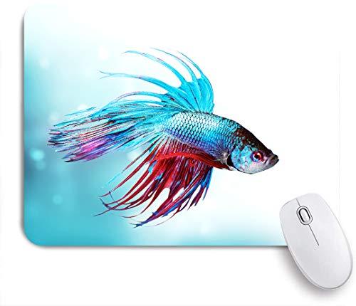 SUHOM Gaming Mouse Pad Rutschfeste Gummibasis,Siamesische kämpfende Betta Fischschwimmen im aggressiven Meer des Aquariums,für Computer Laptop Office Desk,240 x 200mm