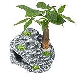 WANGSHAOFENG Rampa de Reptil de rampa de Tortuga Cueva de la Cueva de la Cueva escondite de la decoración del Acuario Adorno con Las Plantas del Acuario de la Cueva del Tanque de Pescado Planta a