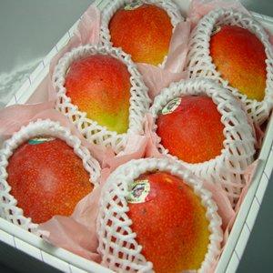 【お中元】 メキシコ産 アップルマンゴー 6個 ( 1個400g〜450g ) 化粧箱入り 【のし付】