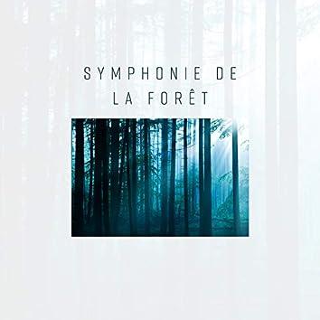 Symphonie de la forêt: Sons de la nature charmants pour la détente