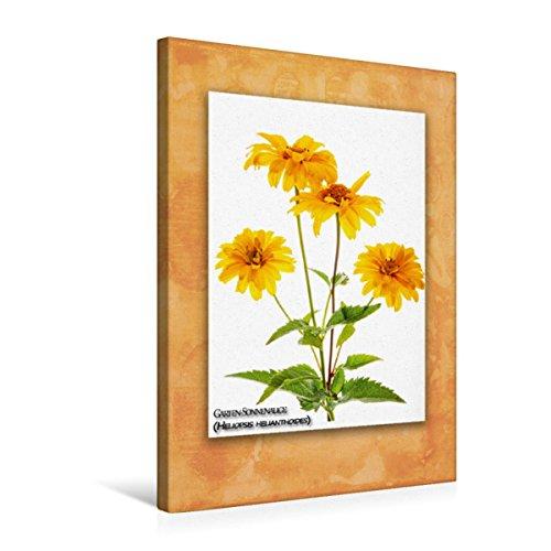 CALVENDO Premium Textil-Leinwand 50 x 75 cm Hoch-Format Garten-Sonnenauge (Heliopsis helianthoides), Leinwanddruck von Georg Hanf