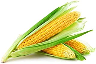 Best sweet corn for sale Reviews