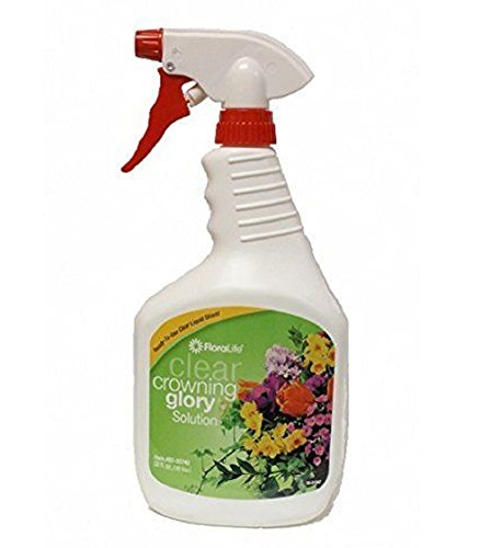 Popular Fresh Flower Sprays