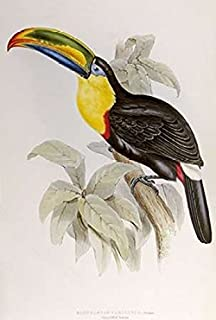 Posterazzi Family of Toucans Poster Print by John Glover (12 x 18)