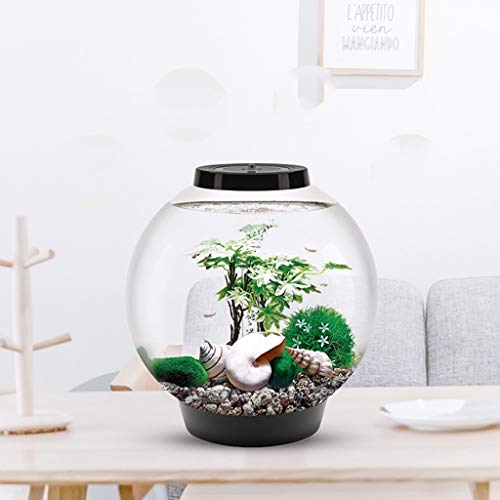Fish Food Supplies | LF stores Fish Tank Individuality Creative Round Fish Tank Small Aquarium Home Indoor Living Room Office Fashion Landscaping Desktop Aquarium 15L Aquariums, Gym exercise ab workouts - shap2.com