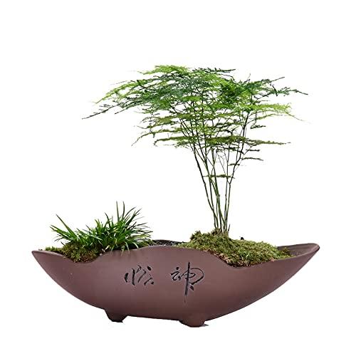 Maceta de Flores Maceta de arena púrpura con orificio de drenaje Suculento planta creativo retro ornamentos chinos, pequeño bonsai wenzhu maceta de flores (sin plantas) Macetas Interior y Exterior