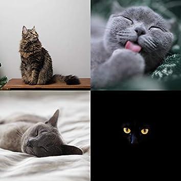 かわいい猫-音楽