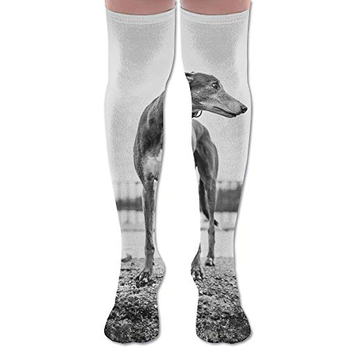 Nifdhkw Greyhound Print Polyester Cotton Over Knee Leg High Socks Funny Unisex Thigh Stockings Cosplay Boot Long Tube Socks for Sports Gym Yoga Hiking Cycling Running Travel