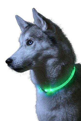 Auraglow Collare Per Cani LED Luminoso Super Brillante Guinzaglio Di Sicurezza ad Alta Visibilità Lampeggiante Per Animali Domestici …