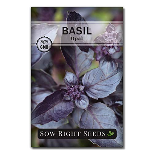 Sow Right Seeds - Opal Basil Seed for...