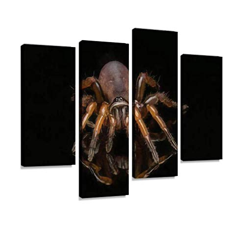 HIPOLOTUS 4 Panel Canvas Pictures Close up Trapdoor Spider on Black Background Wall Art Prints Paintings Stretched & Framed Poster Home Living Room Decoration Ready to Hang