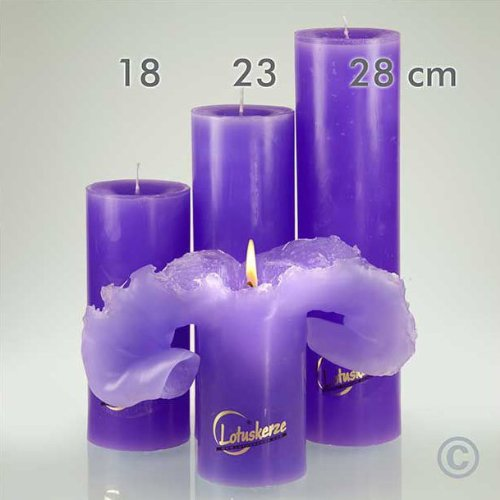 Candela velas de lotus, color lila basic, 23 cm