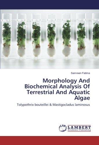 Morphology And Biochemical Analysis Of Terrestrial And Aquatic Algae: Tolypothrix bouteillei & Mastigocladus laminosus