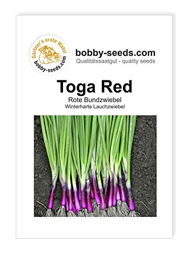 Toga Red Winterheckenzwiebel Samen von Bobby-Seeds