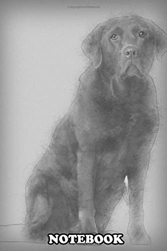 Notebook: Labrador Retriever 8 Years Old Sitting , Journal for Writing, College Ruled Size 6
