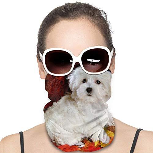 HOMECT Hunde-Gesichtsmaske, Kopftuch, Schal, verschiedene Farben, magische Kopfbedeckung für Damen und Herren