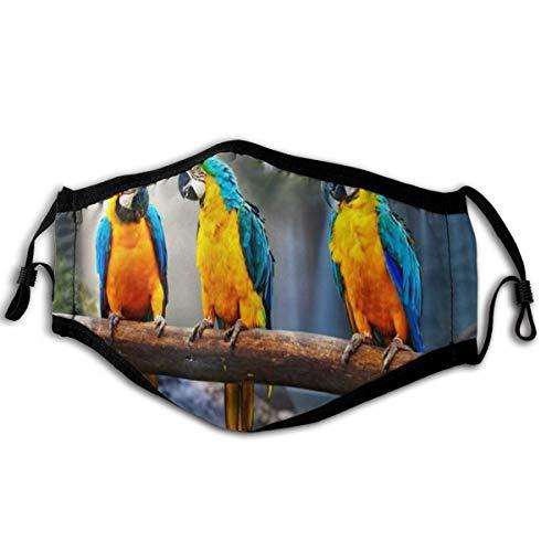MUYIXUAN Gesichtsbedeckung Papagei Niedliche Papageien Vögel Blau Gelb Federbaum AST Wasserfall Felsen Grüne Pflanzen Sonnenlicht Natur Szenisch Sturmhaube Bandanas Halsmanschette mit 2 Filtern