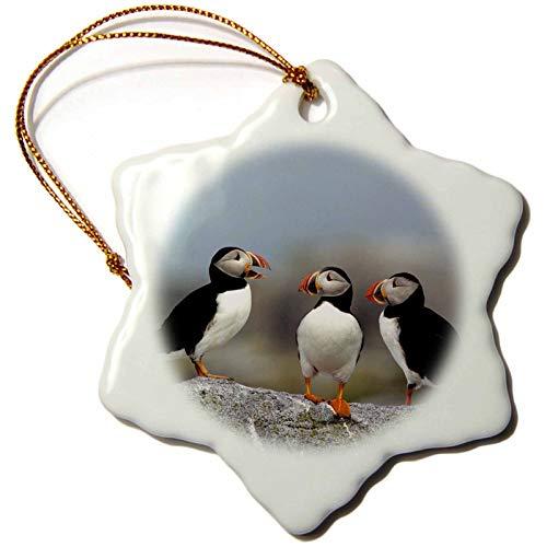 Kysd43Mill D Rose Tre Puffin Atlantic - Macias Seal Island-Canada Ornamenti di Natale per bambini decorazione albero di Natale