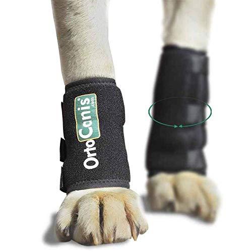 Ortocanis - Muñequera para Perros con artrosis, Lesiones a ligamentos, tendones o Perros Que practican Agility - Talla XS