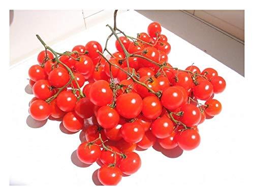 """Premier Seeds Direct ORG112 Tomaten """"Riesentraube Cherry Variety"""" organische Samen (Packung mit 50)"""