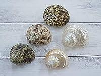 【貝殻の問屋さん(旧店名:貝殻不思議発見)】 サザエ5種セット【約4~6cm/5個】 ヤドカリの宿替えに