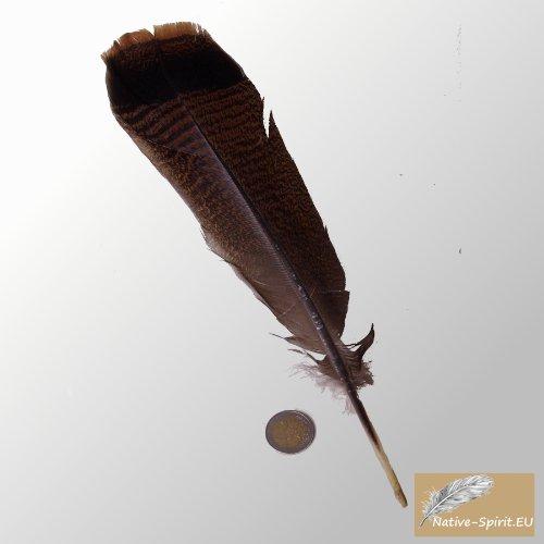 bronze plume de dinde de la dinde sauvage (Wild Turkey queue de plume), avec joli naturel noir/brun coloration directement des USA (taille 14 '' Inch)