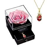 Real Rosa Eterna Hecha a Mano, Flores Preservada Naturales...