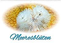 Meeresblueten (Wandkalender 2022 DIN A2 quer): Glanzvolle Fotografien von Blumentieren aus der Unterwasserwelt (Monatskalender, 14 Seiten )