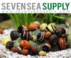 SevenSeaSupply 5 Horned Nerite Fresh Water Aquarium Snails