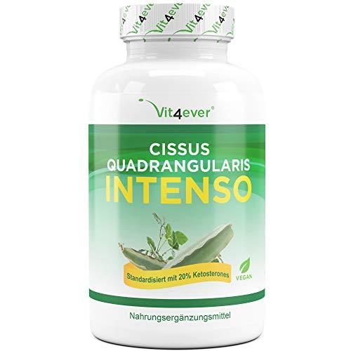 Vit4ever® Cissus Quadrangularis Intenso - 180 Kapsel - 725 mg Extrakt - 20% Ketosterone Anteil - Laborgeprüft - Mit Piperin optimiert - Hochdosiert - Vegan - Premium Qualität
