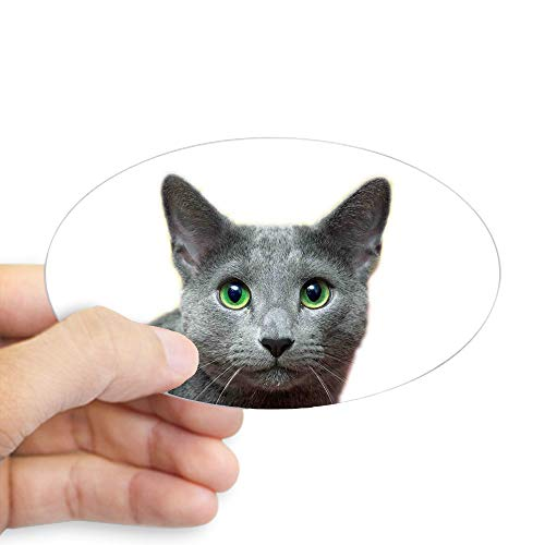 CafePress Russian Blue Cat Oval Bumper Sticker, Euro Oval Car Decal
