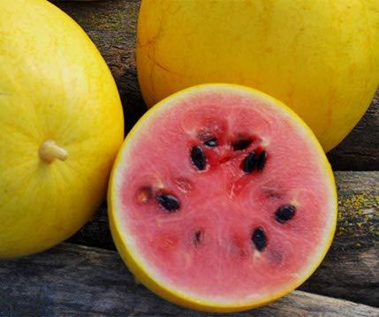 Bobby-Seeds Melonensamen Golden Midget Wassermelone Portion