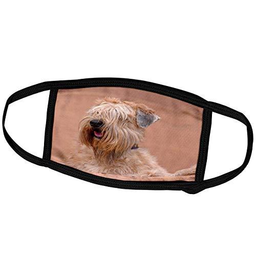 Danita Delimont-Dogs-Soft Coated Wheaten Terrier mit Blick auf Adobe Wall, MR und PR, Gesichtsschal (fm_206387_3)