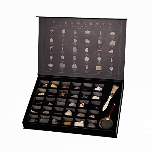 YYSDH Paläontologisches Fossil Sammlung 30 Stück Pädagogische Ansammlung Kreative Geschenk-Ausgangsdekorationen Mit Hochwertigem Geschenkkastenverpacken