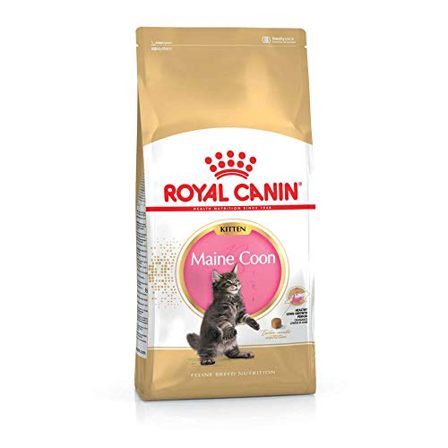 ROYAL CANIN Maine Coon Kitten - 400 g