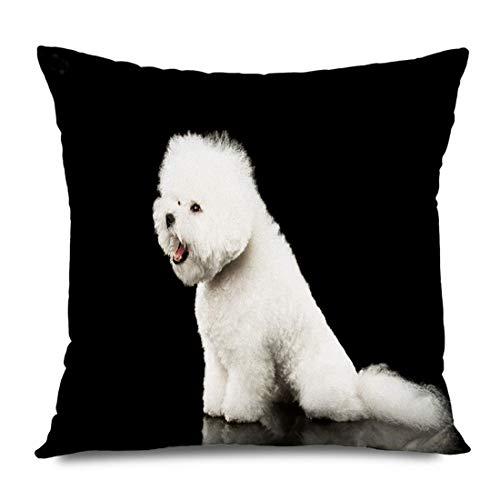 LXJ-CQ Funda de Almohada Cuadrada 18x18 Pura Raza Blanca Nadie Vista de Bichon Frise Perro Perrito Sorprendido Sentado de Mascotas Animales encantadores Fauna Funda de Almohada con Cremallera