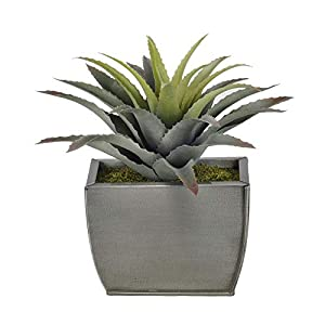 Sejahtera Group Artificial Star Succulent Desk Top Plant in Decorative Vase, 3 lbs