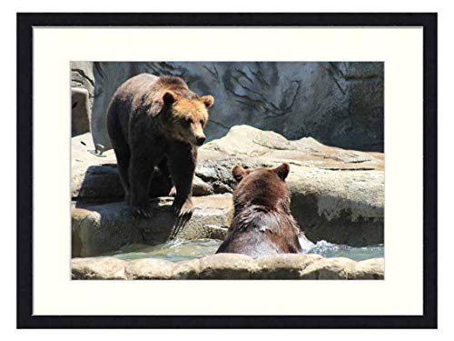 OiArt Wall Art Canvas Prints Wood Framed Paintings Artworks Pictures(20x14 inch) - Brown Bears Bears Exhibit Zoo Wild Bear Brown