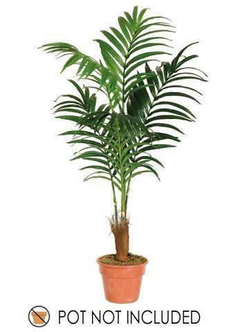 6' Kentia Palm w/131 Lvs. by Allstate Floral