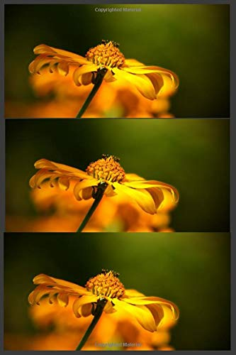 Yellow Flowers: Notebook Diary