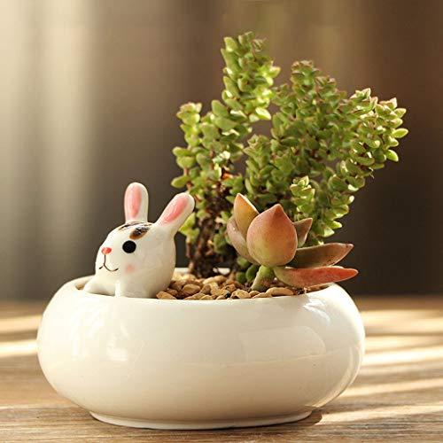 SHUTING2020 Maceta Decorativa Planta Planta suculenta pequeña Planta Verde de Escritorio Interior de la Maceta de cerámica Bonsai Bonsai Pequeño Maceta de jardín